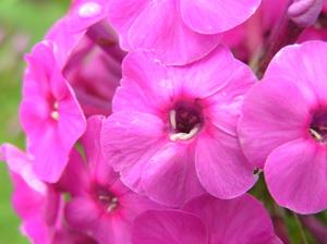 Комнатные цветы весной