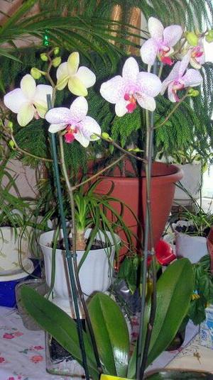Комнатные цветы фильтры воздушной
