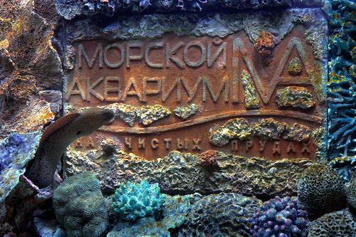Аквариум на Чистых прудах в Москве